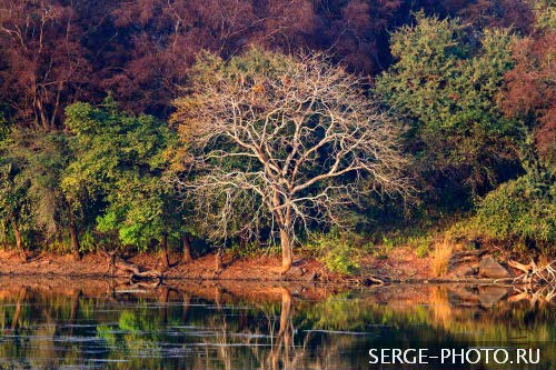 Indian dry deciduous forest  The deciduous forests of Ranthambore were once part of the magnificent jungles of Central India. The terrain is rugged and there are rocky ridges, hills and open valleys with lakes and pools.